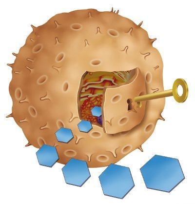 Рецепторы «опознают» инсулин и «открывают» клетки для глюкозы