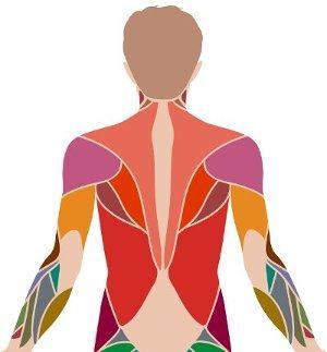 Особое внимание мышцам спины!