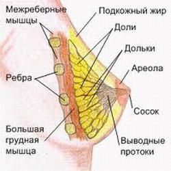 Лактостаз (застой молока) у кормящей матери