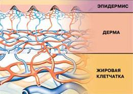 Достаточный уровень микровибрации необходим для нормальной работы кровеносных сосудов