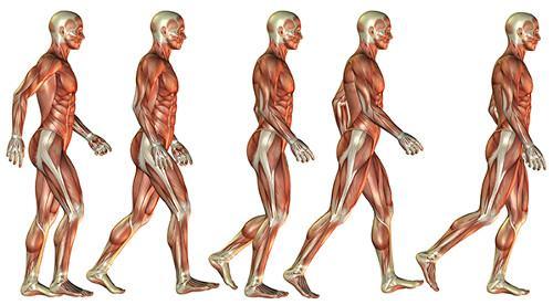 Нарушение работы системы нейромышечной амортизации человека - одна из основных причин возникновения пяточной шпоры